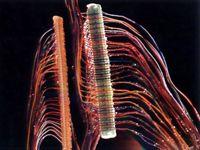 MS™ 4008-D/TR соединитель подпараллеливания на 25 пар жил 0,32-07мм, 3М